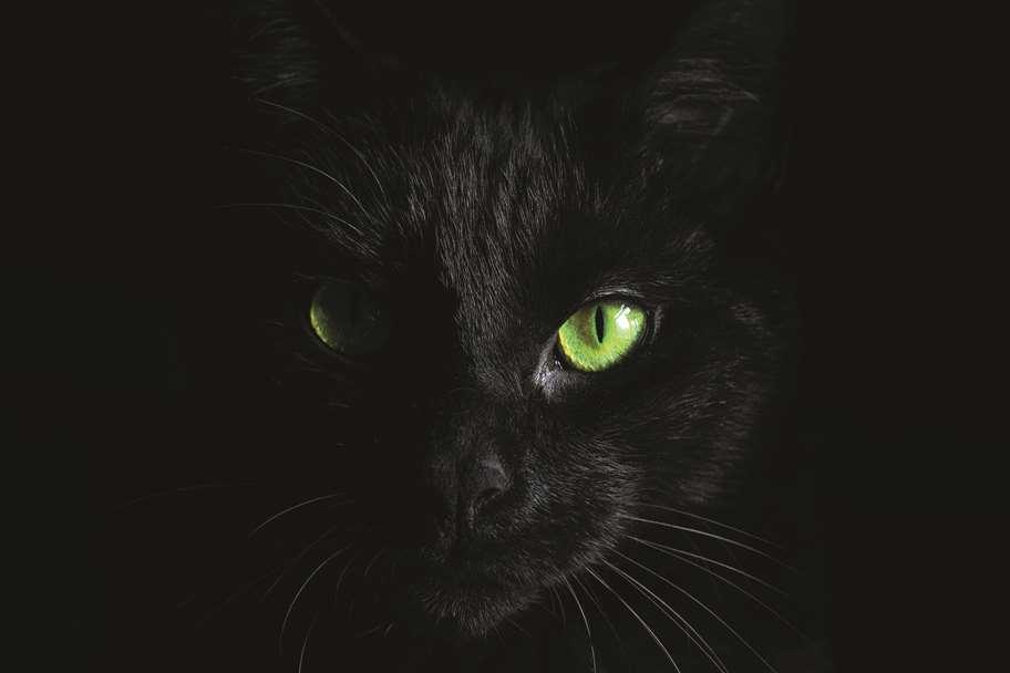 Garagentor Motiv Digitaldruck - Katze