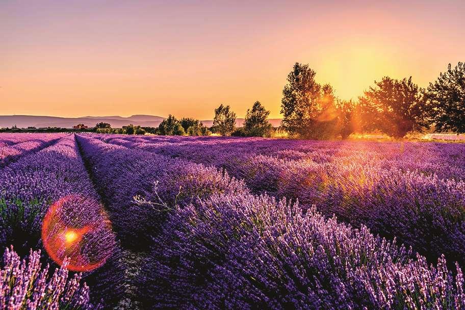 Garagentor Motiv Digitaldruck - Lavendel