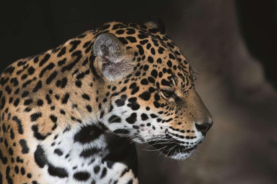 Garagentor Motiv Digitaldruck - Leopard